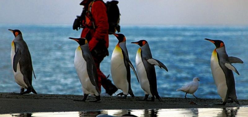Антарктида глазами фотографа